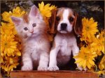 Dogs-and-Cats6