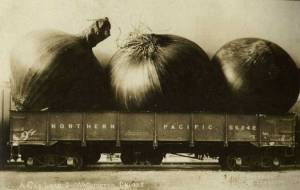 photopostcard-onions