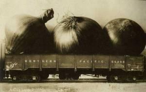 photopostcard-onions
