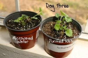 plant3_small