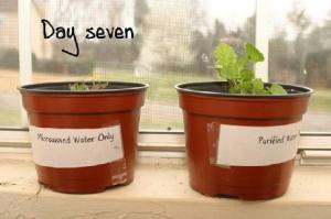 plant5_small