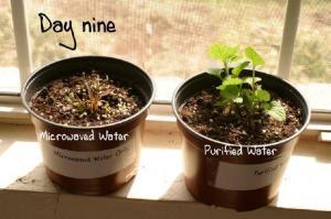 plant6_small