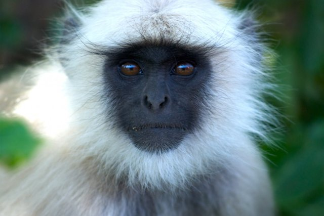 hiv-probably-didnt-jump-to-humans-through-human-monkey-sex-but-through-hunting-of-monkeys-for-food-that-led-to-blood-to-blood-contact